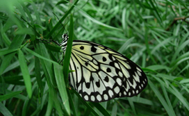 Niagara falls butterfly conservatory discount coupons 2019