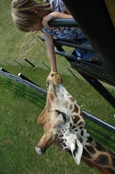Safari Niagara Coupons Concerts Amp Wildlife Conservation